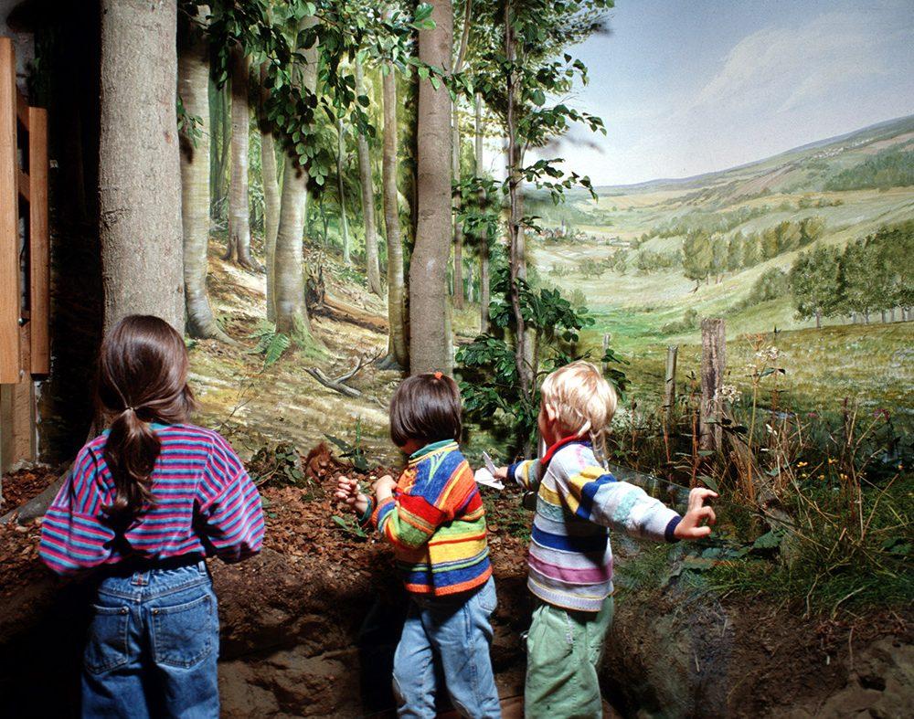 Diorama im Werther Tor: Buchenwald und feuchte Wiese wie sie an vielen Stellen in der Eifel anzutreffen sind.