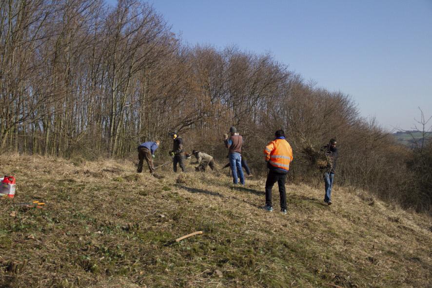 Auch dem Hembüchel oberhalb Iversheims verhelfen wir durch Entbuschungen wieder zu seiner typischen Magerrasen-Vegetation.