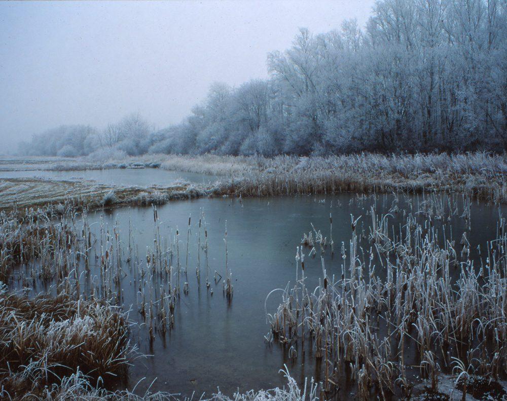 Durch die nachhaltige Naturschutzarbeit des Ortsarbeitskreises Zülpich konnten zahlreiche Feuchtgebiete entwickelt werden